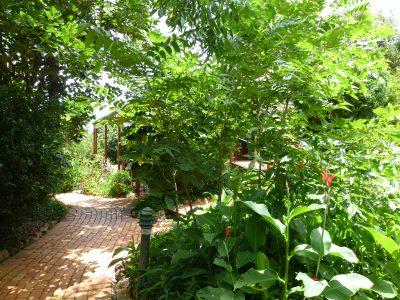 A leafy garden BnB 2