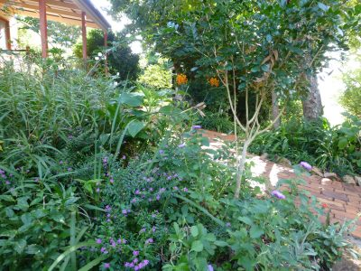 Cott, Studio path + garden