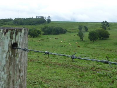 cows, hills, b wire fence post rain - dec 2018 copy
