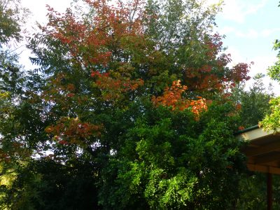 from my kitchen window - changing colours