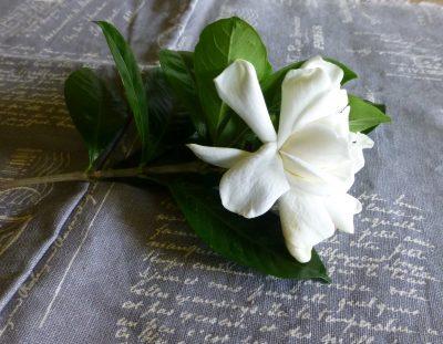 Gardenia -2
