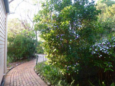 Back cott - path, Bruns in flower